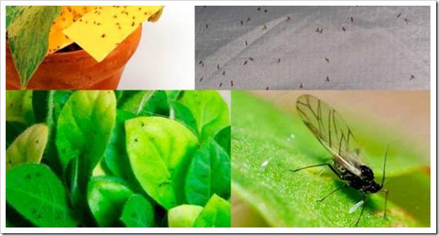 Картинки по запросу Обычные спички могут спасти умирающее растение
